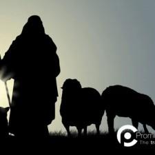 Leader o Pecoraio? Come diventare abili Leader imparando dai Pastori!