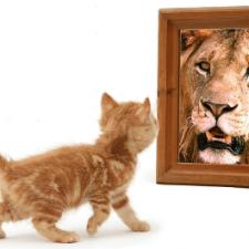 Autostima e Coaching: innamorati di te!
