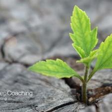 Avere Successo… cercando di non avere Successo