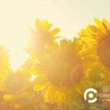 Il Mistero della Vita | Passare dalla Testa al Cuore