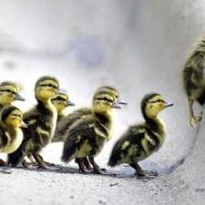 Come migliorare la Leadership con il Coaching?