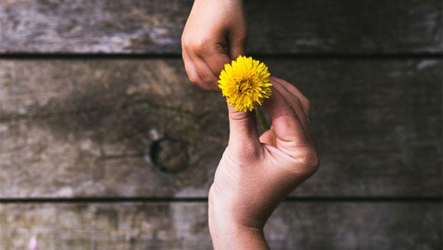 Potenzialità: cordialità gentilezza